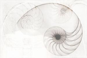 Панно настенное Nautilus Панно (из 2-х плиток) 39,6x59,8